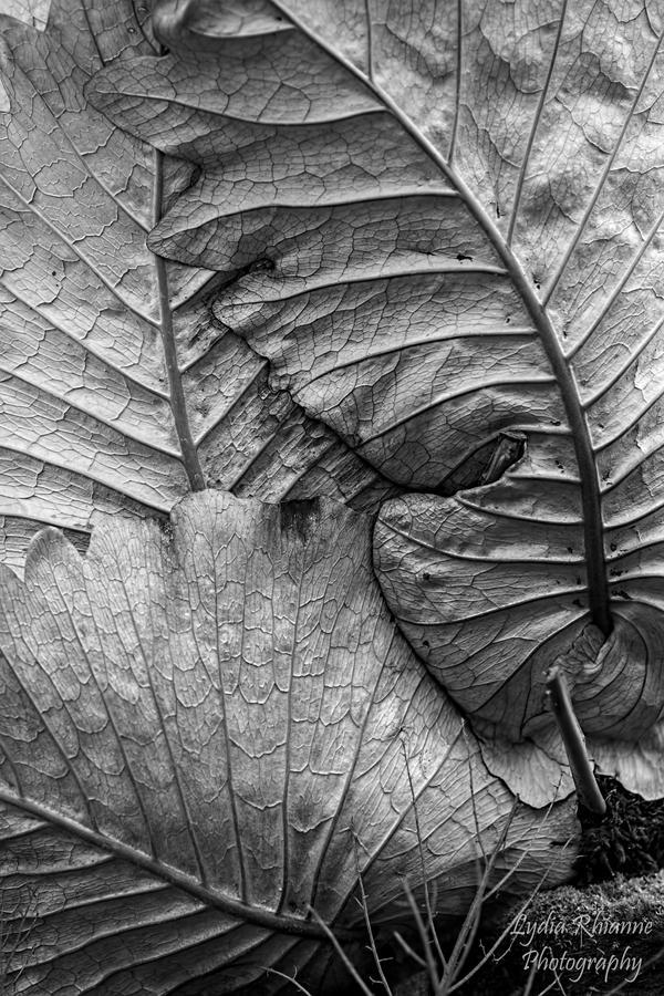 Layers by LydiaRhianne