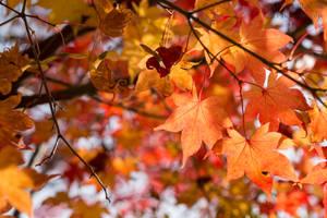 Fall Colors IV