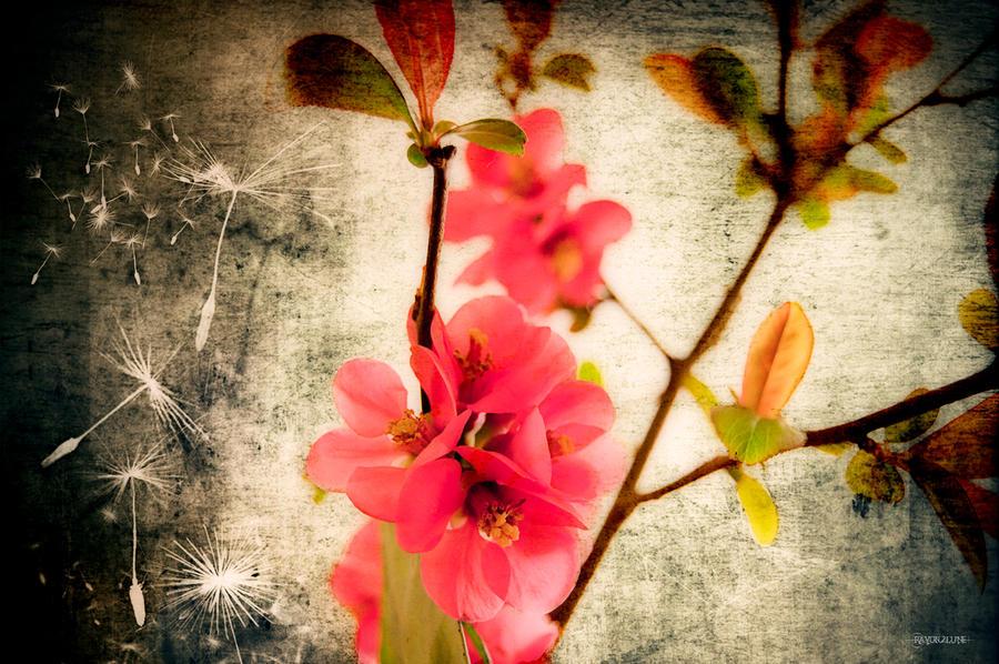 Vivement le printemps by Rayon2lune