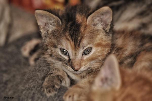 Kitten by Rayon2lune