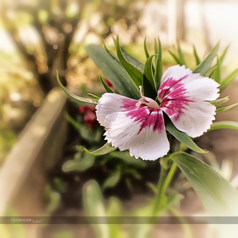Tite fleur printaniere by Rayon2lune