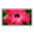 Hibiscus Stamp by sobored89