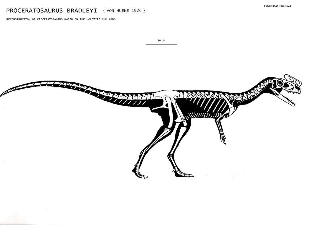 Proceratosaurus skeletal by Trodonto