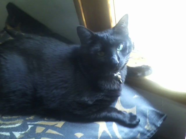 Our Cat Midnight (01)
