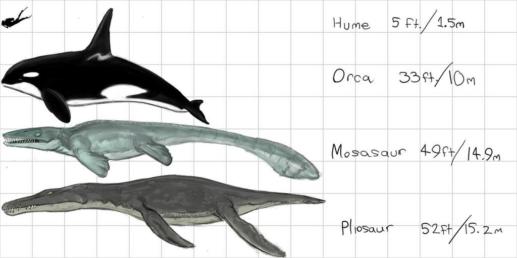Orca Pliosaur Mosasaur Maximum Size Chart by Enneigard on DeviantArt