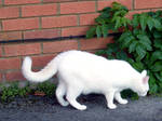 white cat stock 1