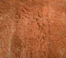 brown short fur texture by DemoncherryStock