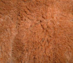 brown short fur texture