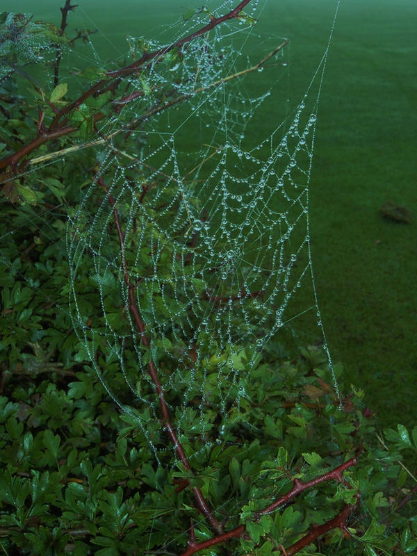 spiderweb stock by DemoncherryStock