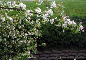 Blossoming Landscape Stock