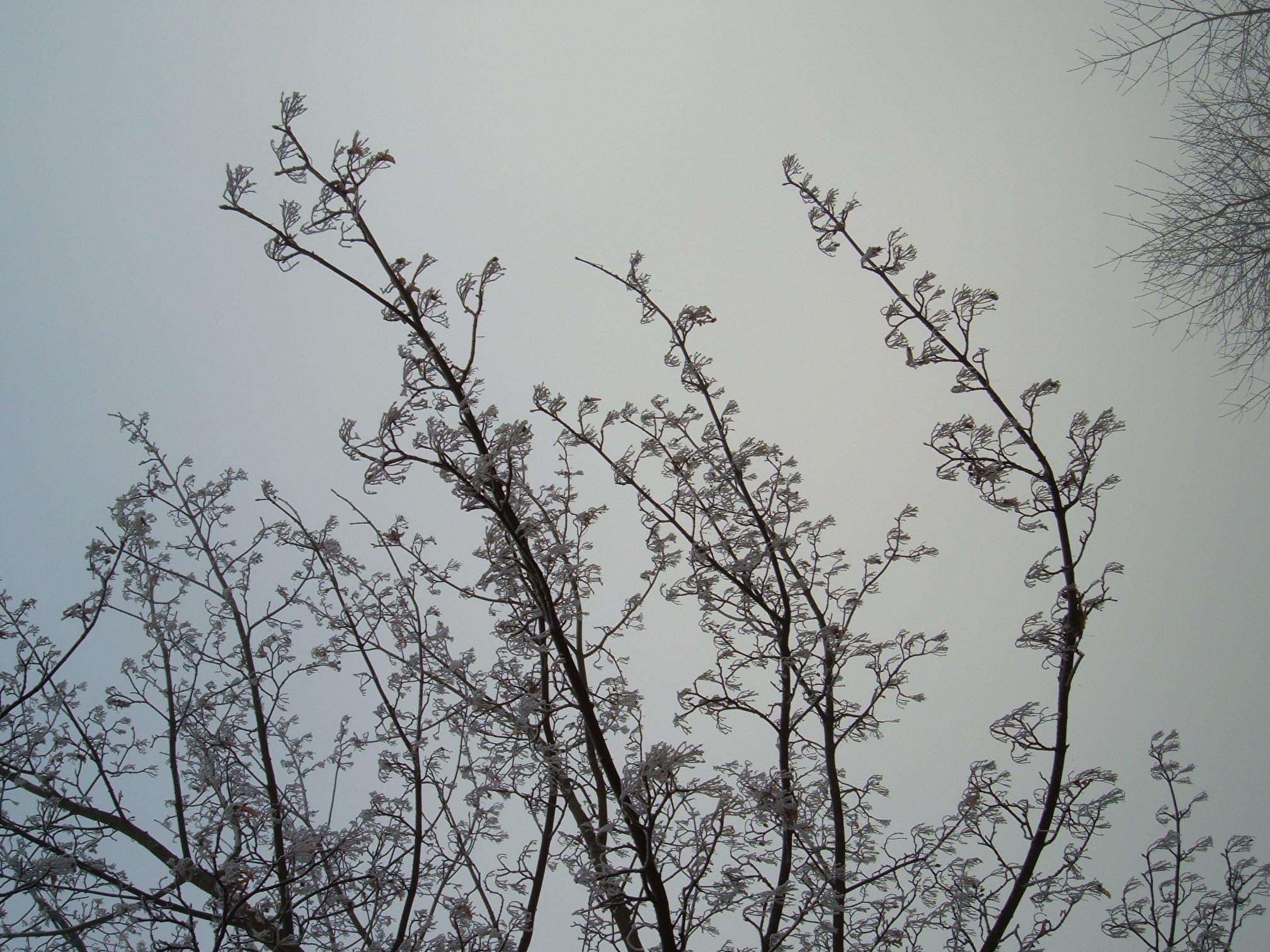 winter branch stock by DemoncherryStock