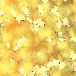 Falling Petals 3