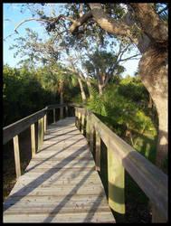 Florida 3 by Mattfat375