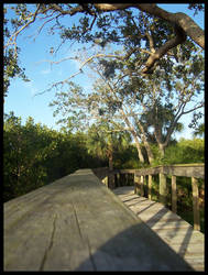 Florida 4 by Mattfat375