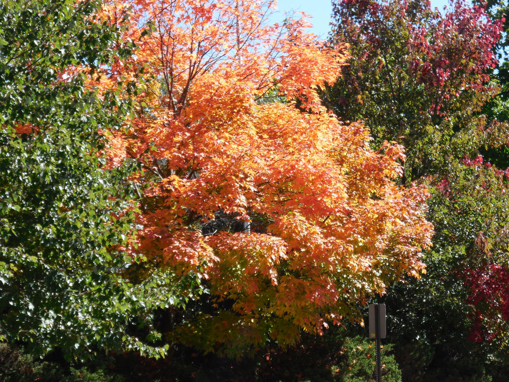 Autumn Colors 4 by zoey17