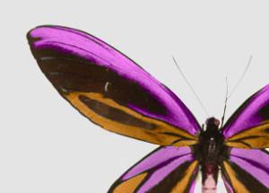 lespapillons's Profile Picture
