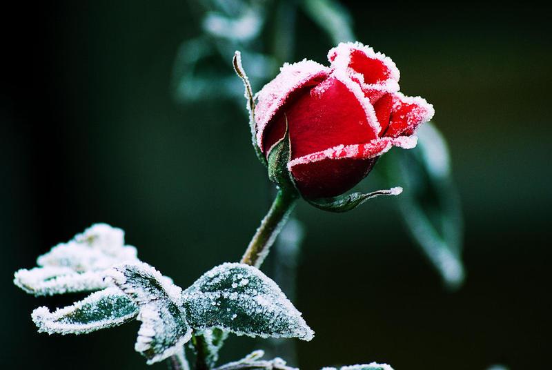 Frozen 2 by splishsplashsplush