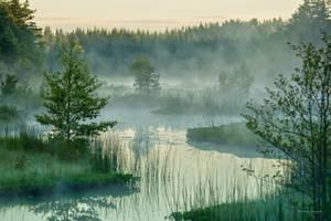 A foggy morning by roisabborrar