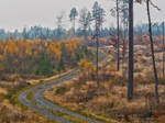 Autumn at the coutry road