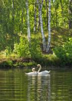 Romance on the water by roisabborrar