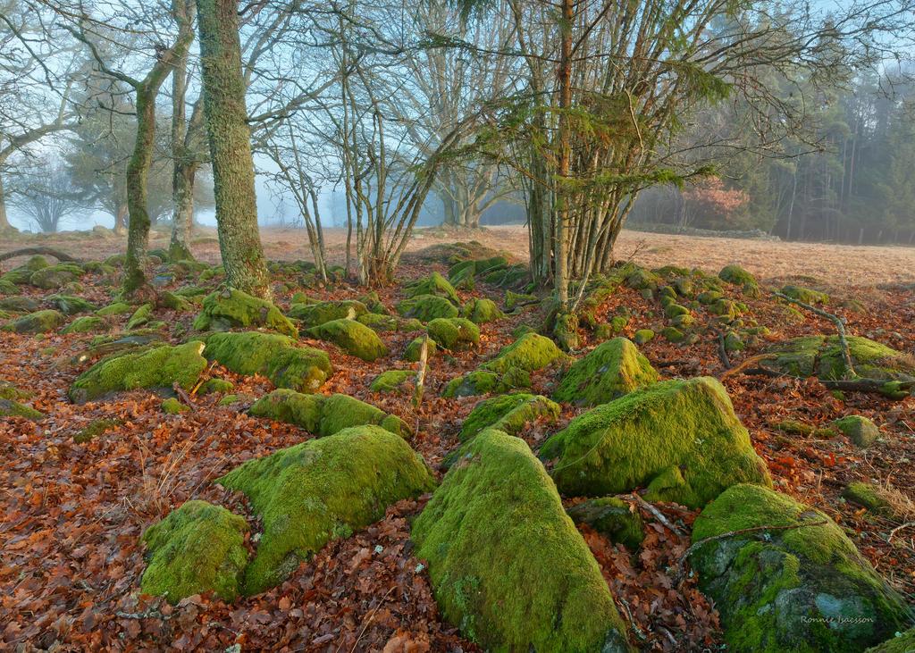 Morning light among the mossy stones by roisabborrar