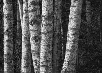 Sunshine among the trees by roisabborrar