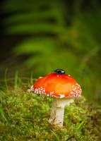 In the forest by roisabborrar
