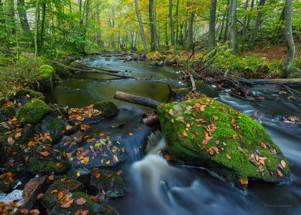 Autumn at the river by roisabborrar