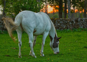 Late evening in the paddock by roisabborrar