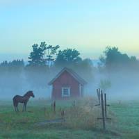 Foggy early morning by roisabborrar