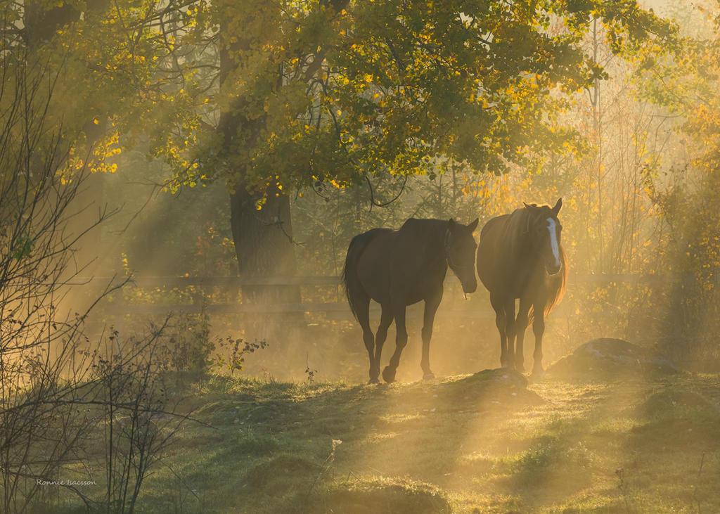 Friends in the paddock by roisabborrar