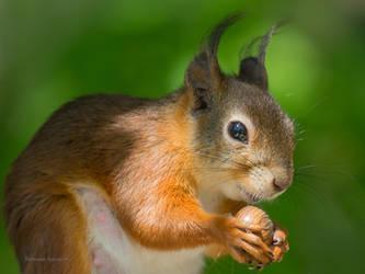 Thx for the nut by roisabborrar
