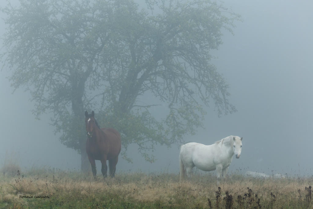 Foggy in the paddock