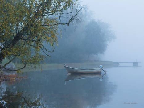 Foggy at the water