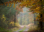 Walking among autumn colors !