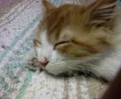 cat nap by davidisgay