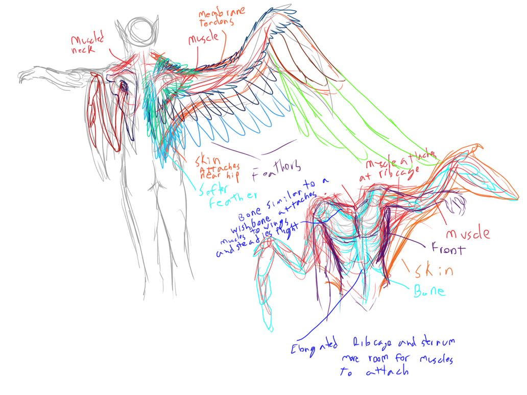 Iz and El Anatomy Study by lover-of-the-Drow on DeviantArt