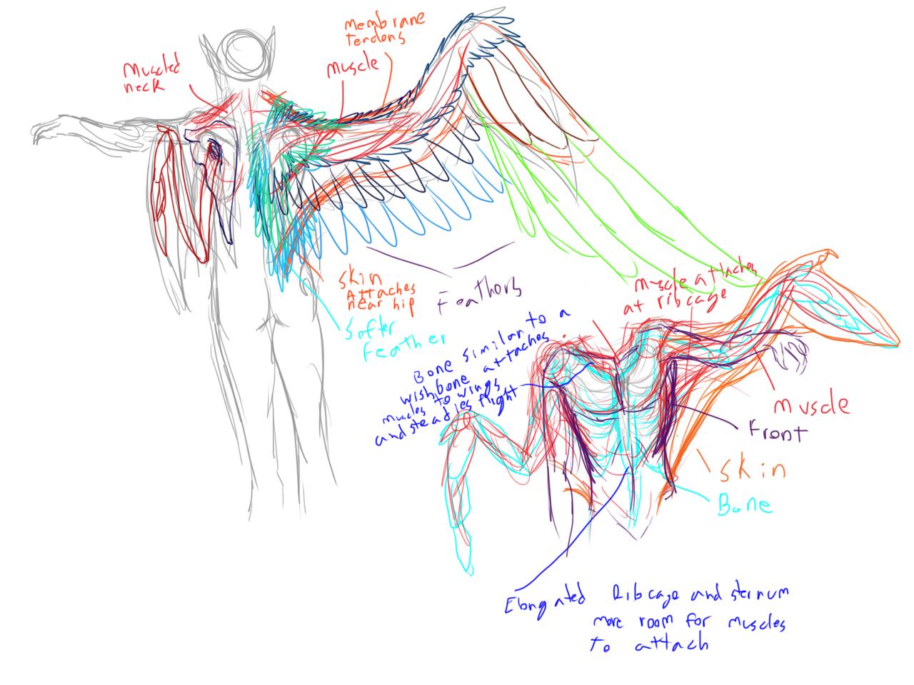 Bird diagram flight