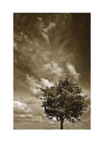 One tree sky