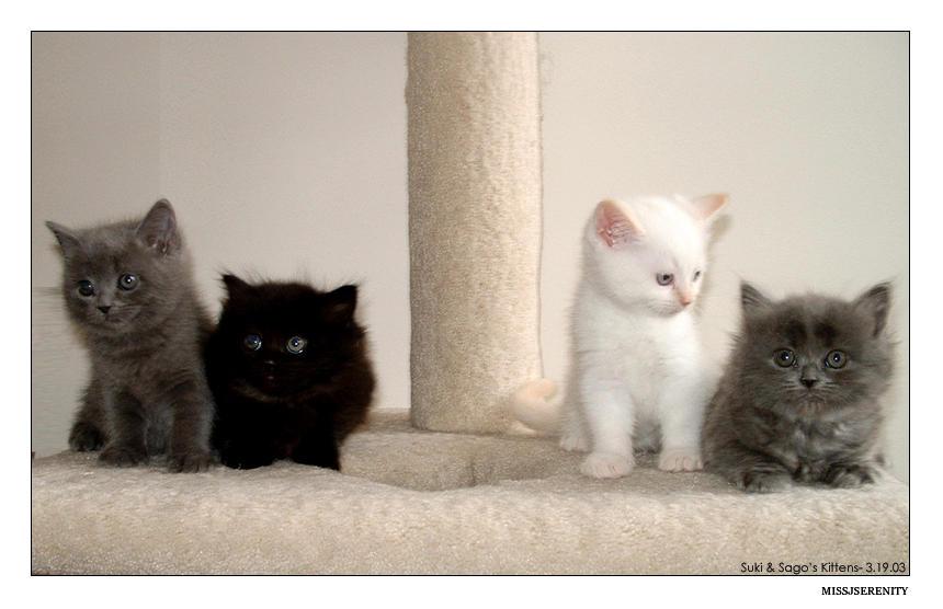 Four Siblings by missjserenity