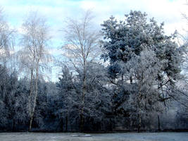 Trees in snow by DonWee