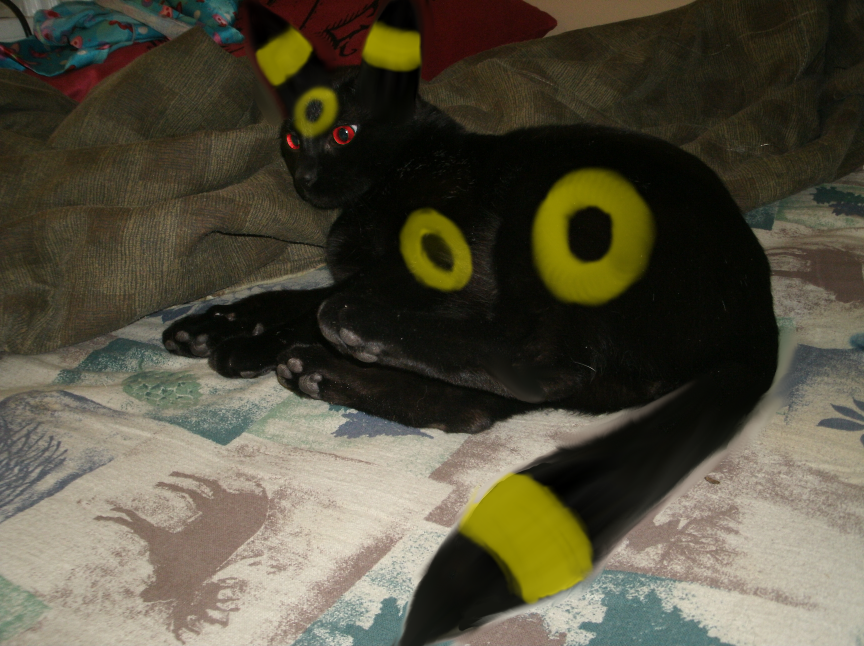 Real Life Umbreon Boo By Ophidianwench On Deviantart