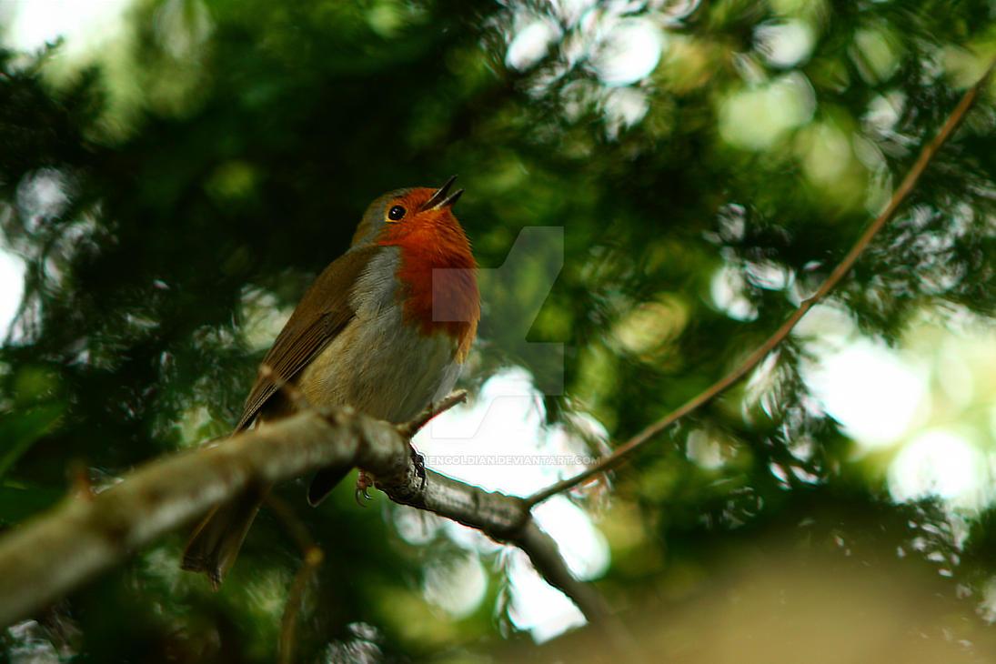 Singing Robin by KerenGoldian