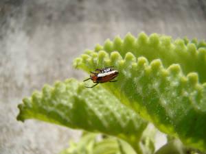 Spider under leaf