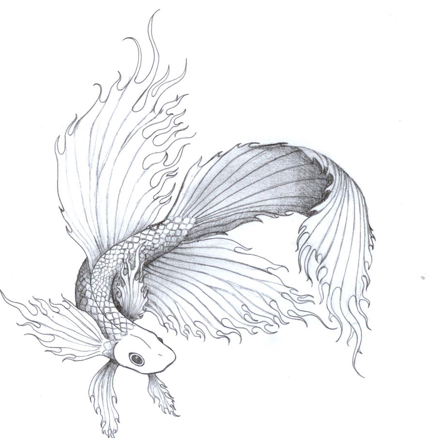 Siamese Fighting Fish By Chakra San On DeviantArt