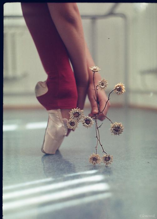 dried flowers by NataliaCiobanu