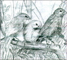 Canaries by eLeEn