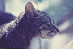 Profile Mug Kitty by iconkid