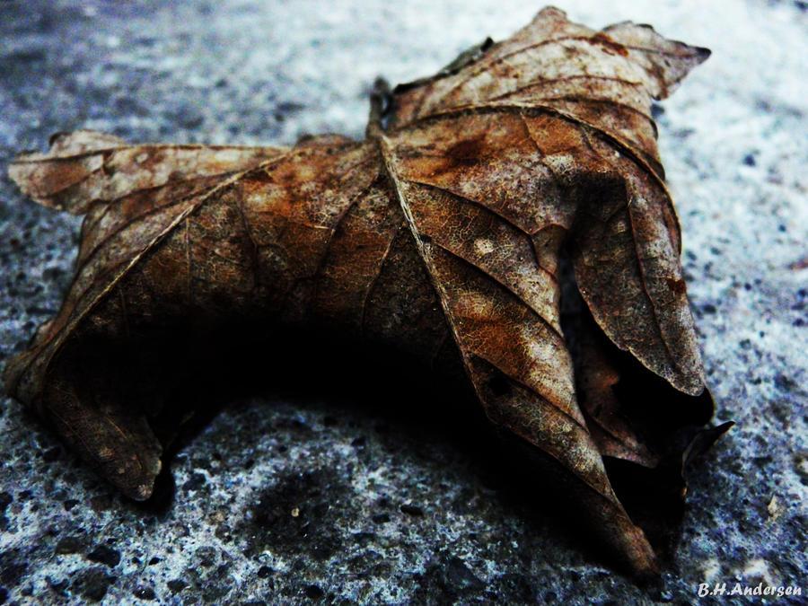 Leaf by BHandersen