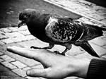 -Black Bird-